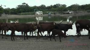 Piper feeds lots of animals at Safari World
